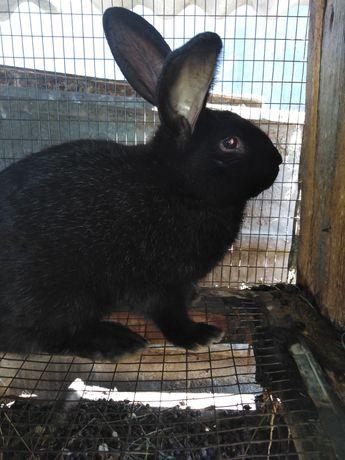 Продам Кроликов помесных серого и чёрного цвета