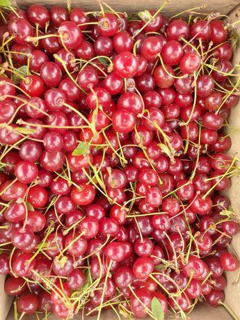 Вишня  Малина Смородина свежие ягоды