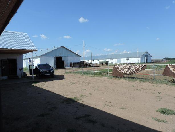 Срочно продам животноводческую ферму!