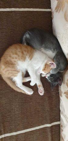 В добрые руки котята 2.5 месяца
