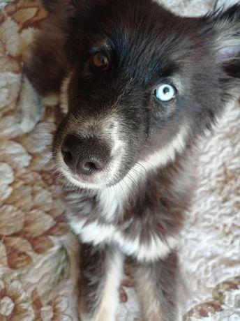 Найден щенок ул. Беспалова- Гагарина