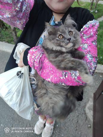 Нашли молоденькую кошечку