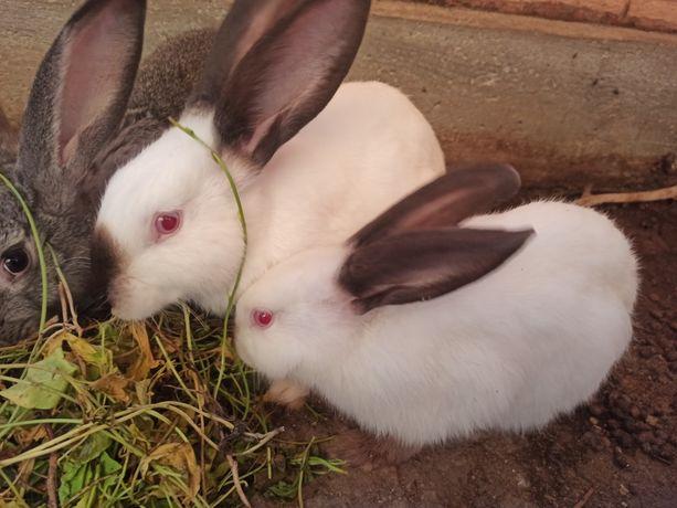 Продам кроликов, четыре месяца.