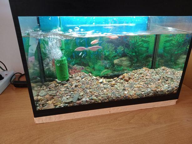 продам аквариум готовый с рыбками