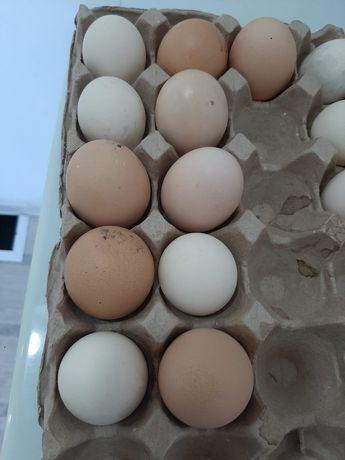 Яйцо, домашние..