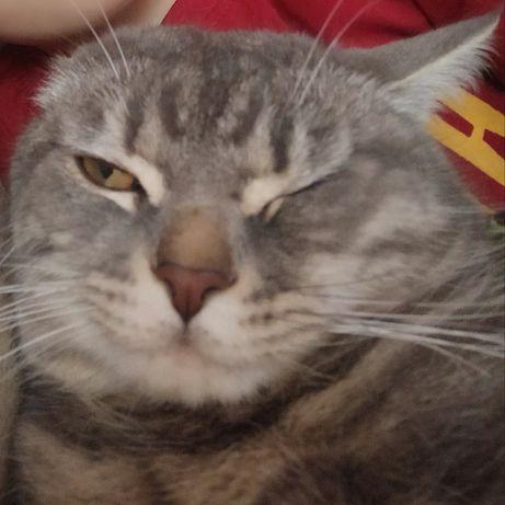 Потерялся кот. ВОЗНАГРАЖДЕНИЕ.