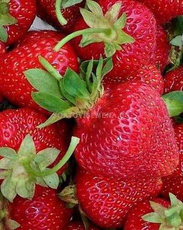 продавамрасад ягоди