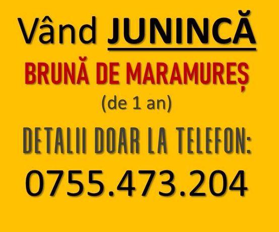 Vitica, Vitea, Juninca (Bruna de Maramures) de 11 luni, nemontata