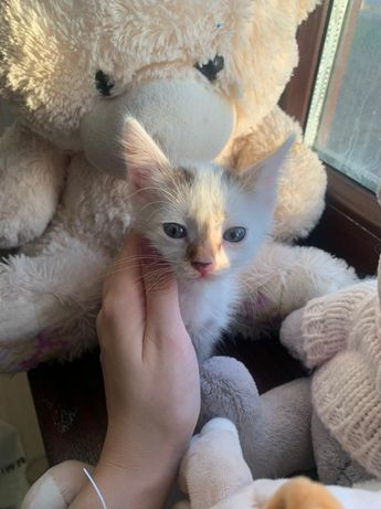 Отдам котенка в добрые руки