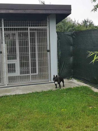 Hotel canin Apache cazare căței