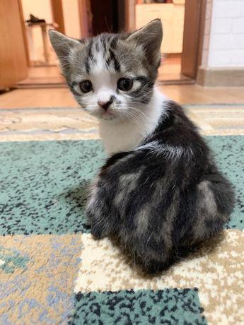Ищут Дом Чудесные Котята