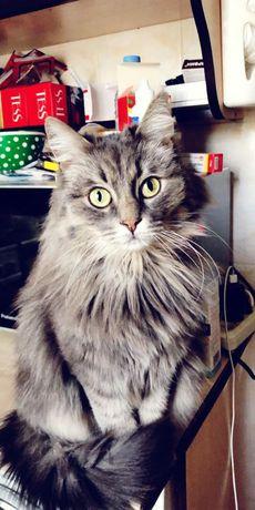 Потерялась кошка в районе Шагабутдинова и Айтике би