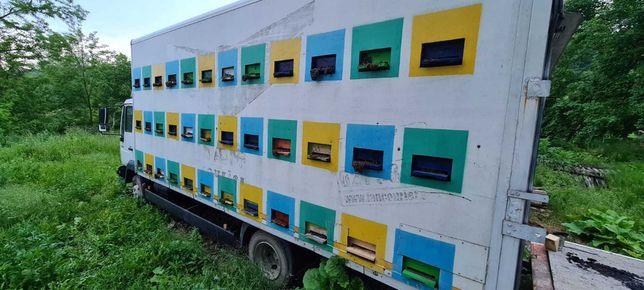 Vând camion cu familii de albine