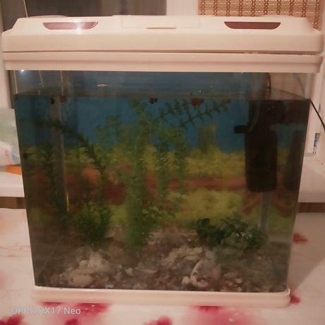 Заводской аквариум 55л с рыбками 30 штук