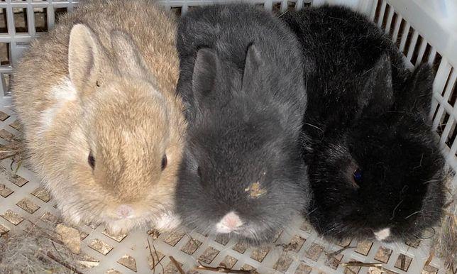 Декоративные кролчата ищут хороших друзей.