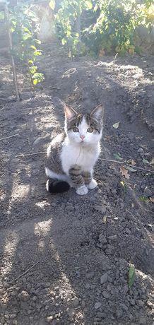 Найден котёнок трехцветка
