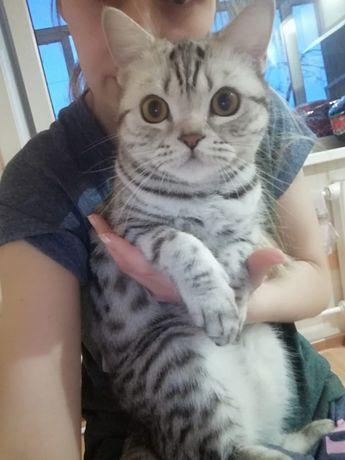 Отдадим кошку в добрые надёжные руки