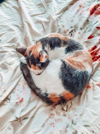 Ofer spre adoptie pisica