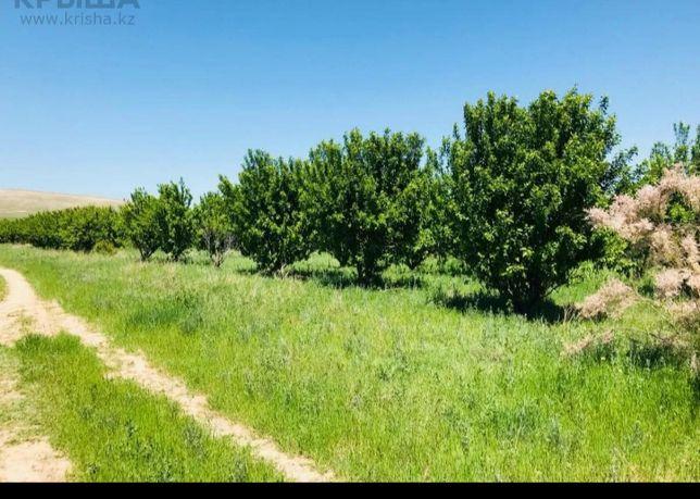 Земля плодоносящая 1,5 га выкупленная в совхоз Капланбек жаксы жерде