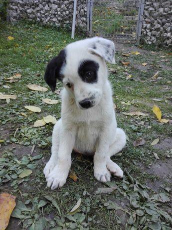 Ofer spre adopție câini grăsuni și jucăuși, vaccinați și deparazitați