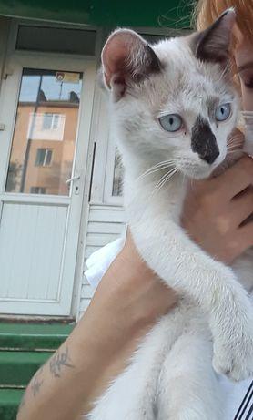 Кот-парень 3 месяца, красавец