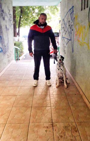 Dresaj canin în București