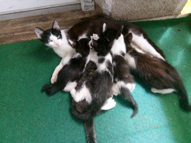 Donație pisicuțe