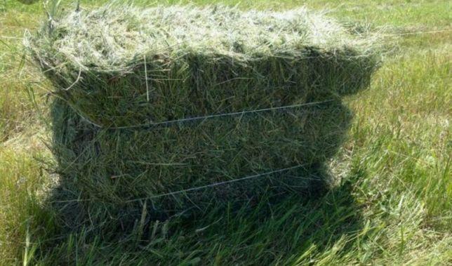 продается сено луговое