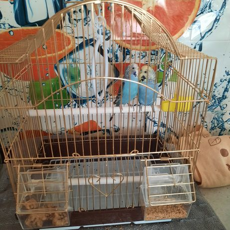 Продам попугаев 2 шт