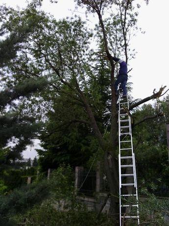 Резитба на големи дървета