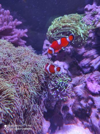 Професионална поддръжка на морски и сладководни аквариуми.