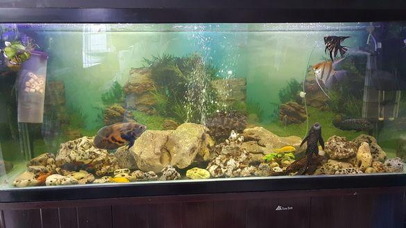 400 л. аквариум Перфектен!