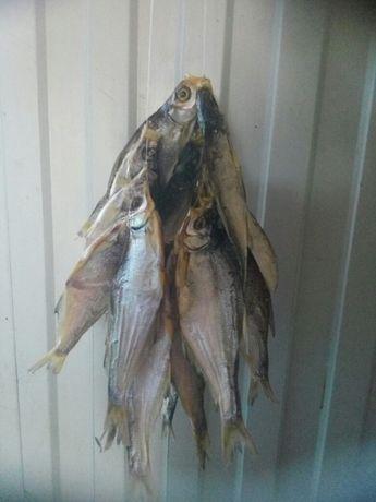 Сушенная рыба.