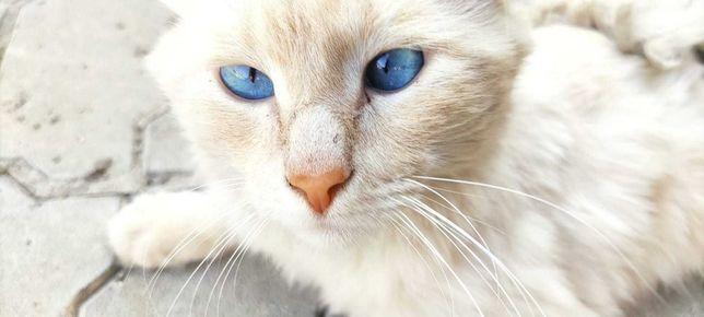 Кот молодой ищет хозяина (хозяйку), бесплатно
