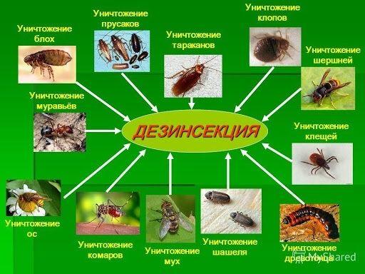Уничтожаем клопов тараканов и др насекомых