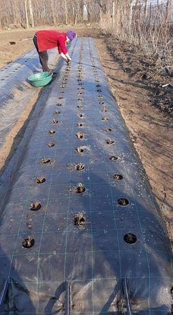 Folie agrotextil 0.5x100ml; 1x50m; 1.5x100m;2x100m;PRETURI PRODUCATOR