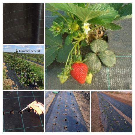 IMPORTAM: Folie Agrotextil/ANTIBURUIENI, Role:50m- 100ml, UV, 100gr/mp