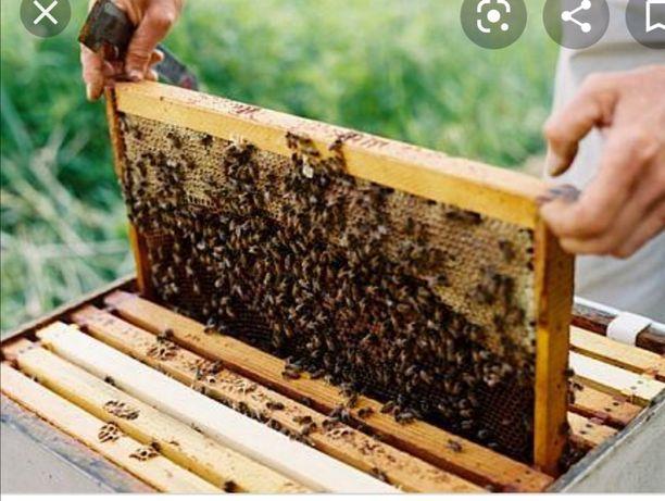 Vând rame de albine