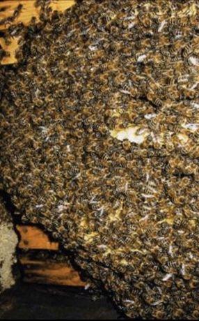Pcheli.Otvotki Пчели,,пчелни семейства' отвотки кошери