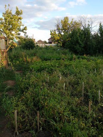 Сдам дачный участок для посадки огорода