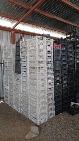Ящики пластмассовые для ягод и фруктов