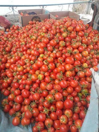 Қызанақтар(помидоры )