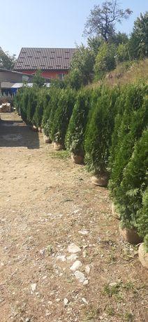 Plante ornamentale si gazon la comanda