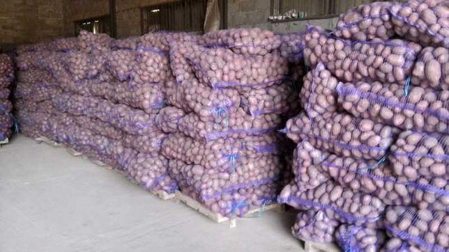 Картошка сорт Королева Анна гала оптом разница привозим с доставкой