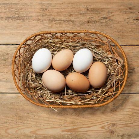 Продам домашние яйца