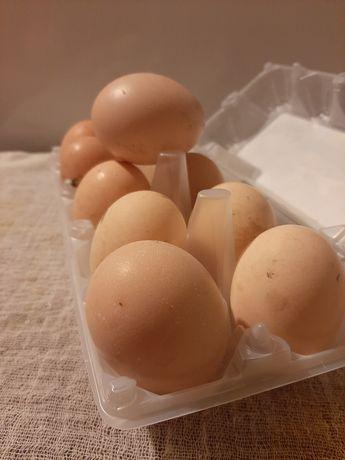 Яица инкубационные