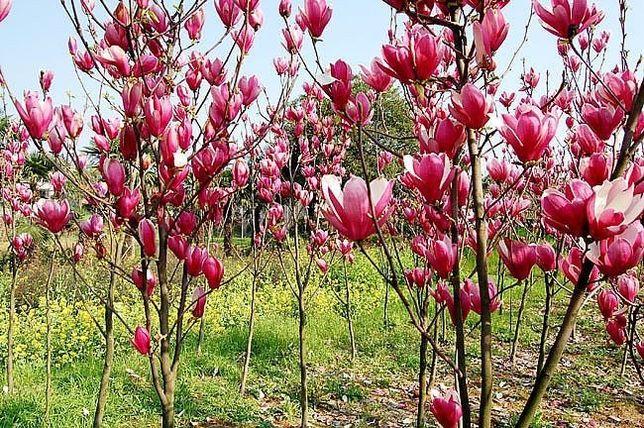 Pomi fructiferi Arbuști fructiferi și arbuști ornamentali!