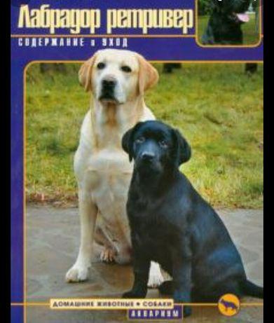 Найдена собака лабродор