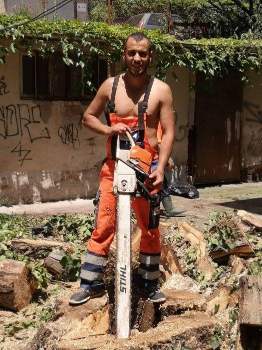 Рязане на опасни дървета, кастрене на клони, услуги от алпинисти