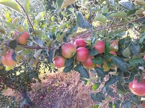 Pomi fructiferi si vita de vie
